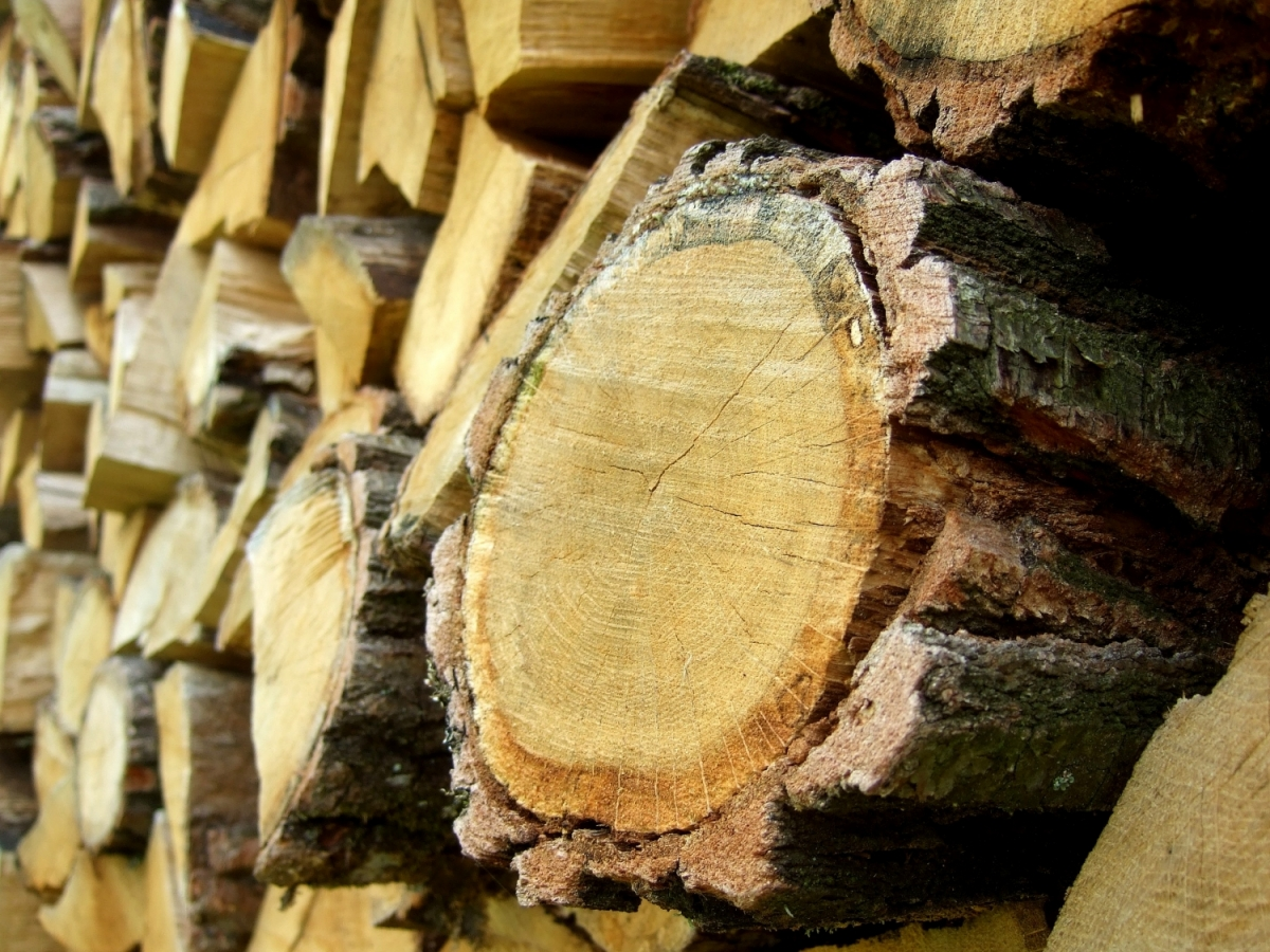 bois construction maison