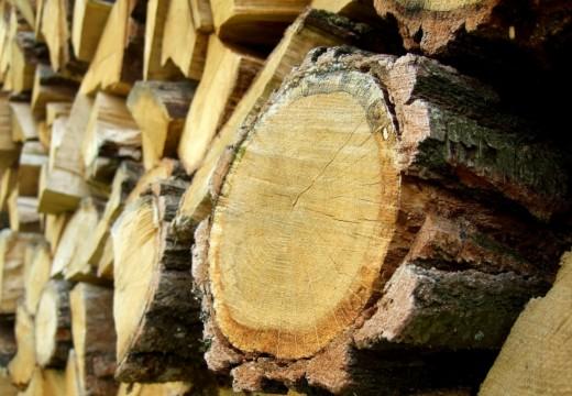 Une maison en bois, les multiples attraits d'un matériau naturel